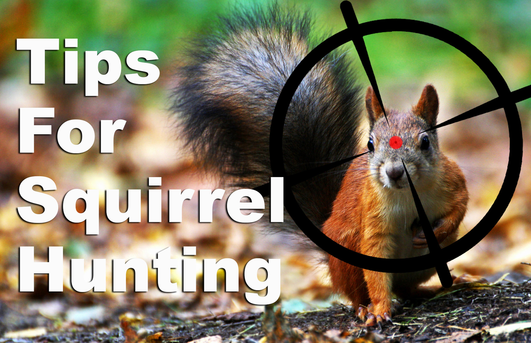 Tips for squirrel hunting